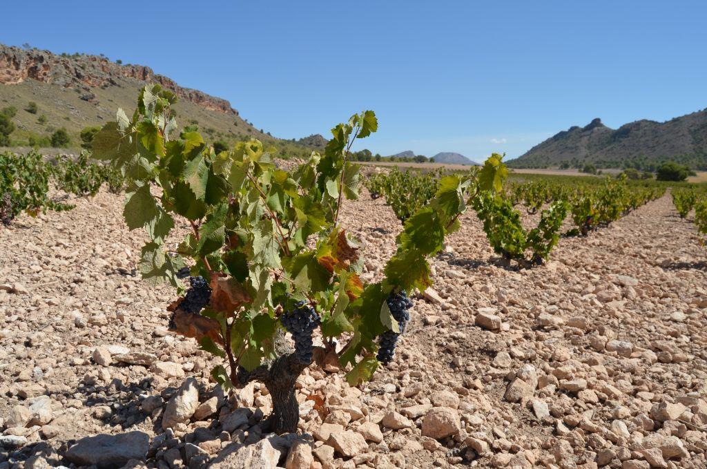 Jumilla_Bodega Sierra Norte07